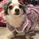 February days of the year for kids dress up dog