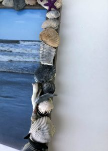seashell frame closeup